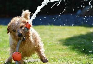 No verão, cachorros precisam de atenção especial para não terem hipertermia ou queimaduras Foto: Pixabay