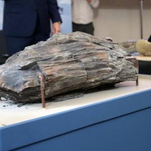 Na foto, tronco fossilizado que estava no Museu Nacional no momento do incêndio e foi resgatado. A peça foi encontrada na Antártica e tem idade estimada entre 70 e 80 milhões de anos Foto: Márcio Alves / Agência O Globo