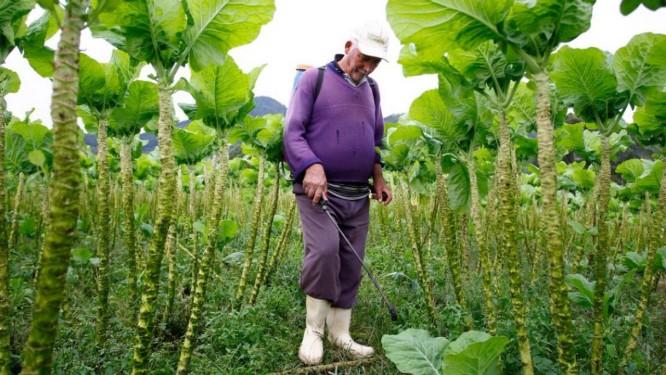 Uso de agrotóxico em plantação em Vieira, Teresópolis Foto: Pablo Jacob/30-5-2012