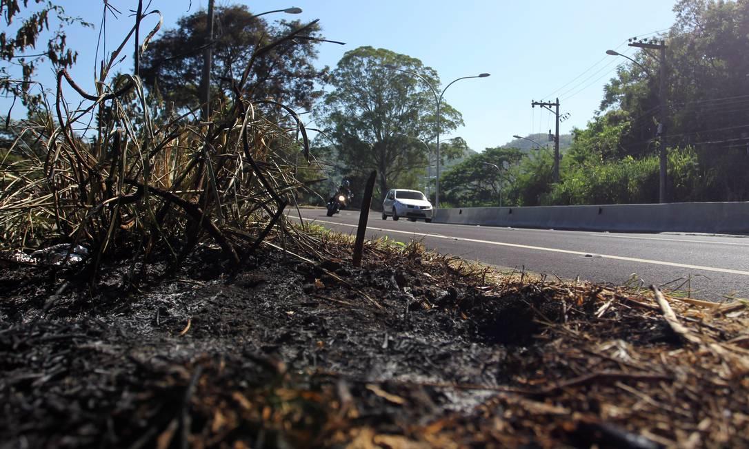 Estiagem continua castigando o Rio. Na foto, vegetação queimada às margens da Estrada Grajaú-Jacarepaguá Foto: Márcia Foletto / Agência O Globo