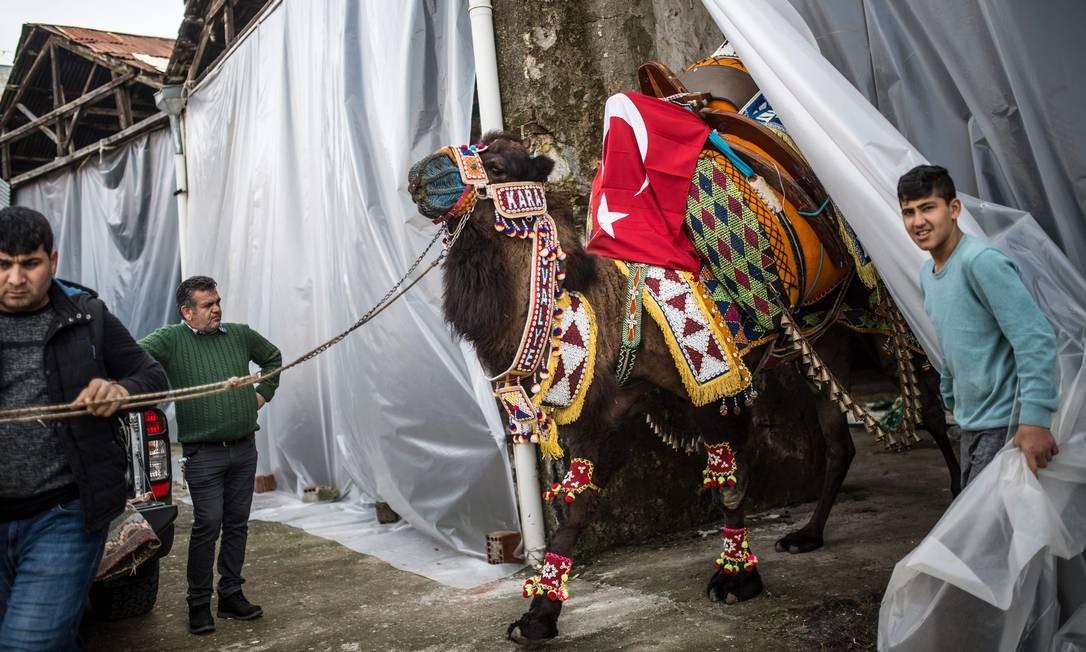 Dono levando seu camelo para o festival que acontece na cidade de Selcuk Foto: BULENT KILIC / AFP