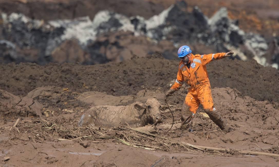 Policiais impedem voluntários de retirarem vaca da lama de rejeitos por risco de romprimento de nova barragem Foto: Márcia Foletto / Agência O Globo