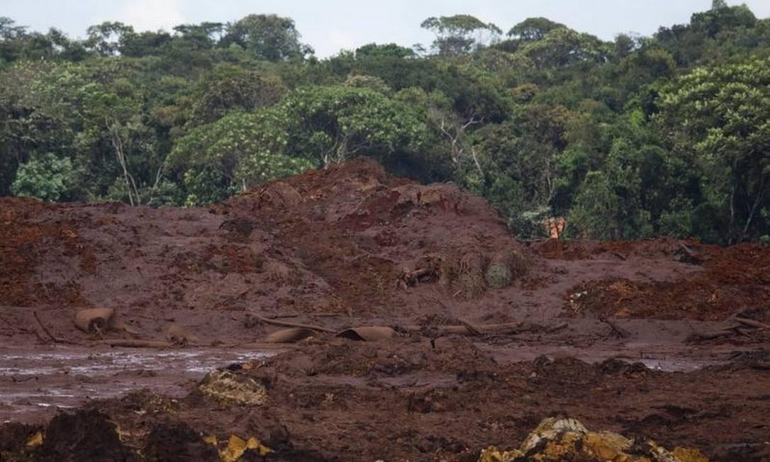 Marca da lama na vegetação do distrito de Córrego do Feijão, após o rompimento da barragem da Mina do Feijão, em Brumadinho Foto: Marcia Foletto - Agência O Globo