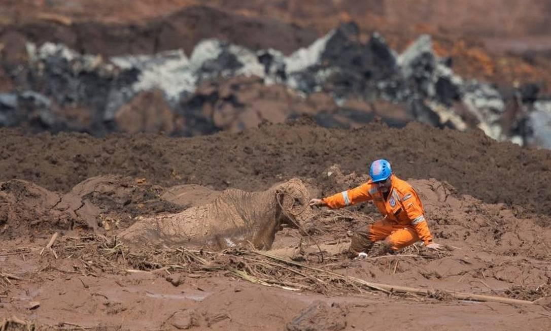 Voluntário da ONG Anjos do Asfalto tenta retirar uma vaca que está atolada na lama. Foto: Márcia Foletto - Agência O Globo
