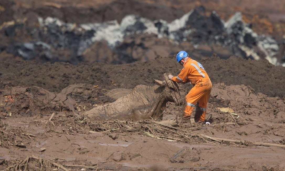 O animal estava há dois dias agonizando na lama do Córrego do Feijão Márcia Foletto / Agência O Globo