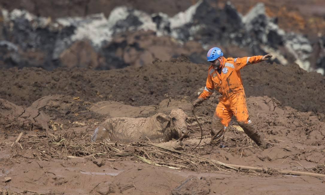 Os voluntários foram chamados por um grupo de proteção aos animais de Brumadinho Foto: Márcia Foletto / Agência O Globo