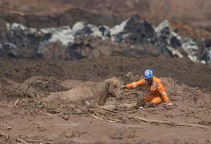 Voluntários do grupo de socorristas Anjos do Asfalto tentam retirar uma vaca presa na lama de rejeitos em Brumadinho Foto: Márcia Foletto / Agência O Globo