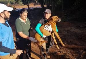 Cachorro foi retirado da lama com a ajuda de voluntários no Córrego do Feijão Foto: Ana Lúcia Azevedo / O Globo