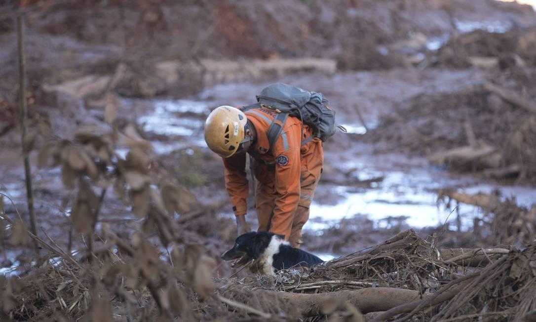 Cães farejadores e uma escavadora auxiliam nas buscas Foto: Márcia Foletto / Agência O Globo