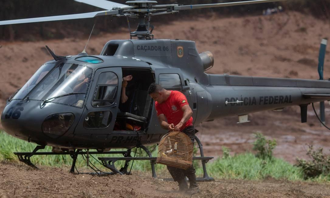 Na fuga da avalanche de lama, muitos moradores deixaram para trás seus animais de estimação, como pássaros em gaiolas. Bombeiros resgataram vários deles com vida e puderam liberá-los MAURO PIMENTEL / AFP