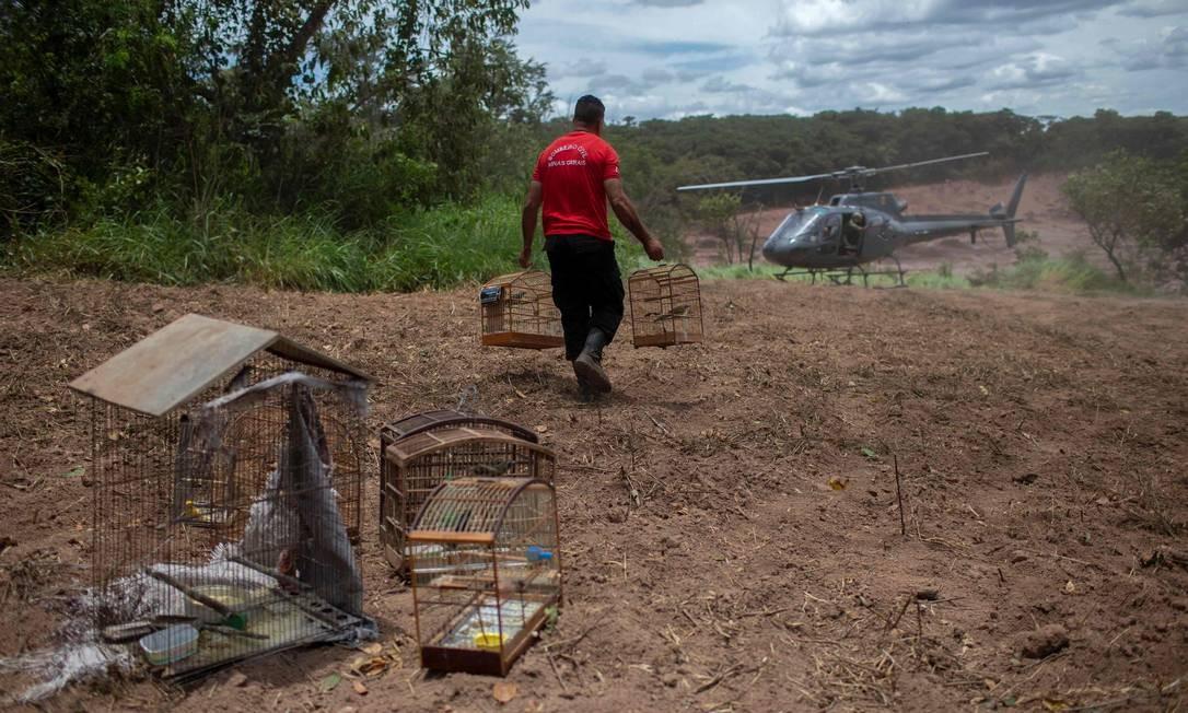 Muitas gaiolas encontradas em casas abandonadas foram recuperadas pelo Corpo de Bombeiros antes que os passaros morressem de inanição MAURO PIMENTEL / AFP