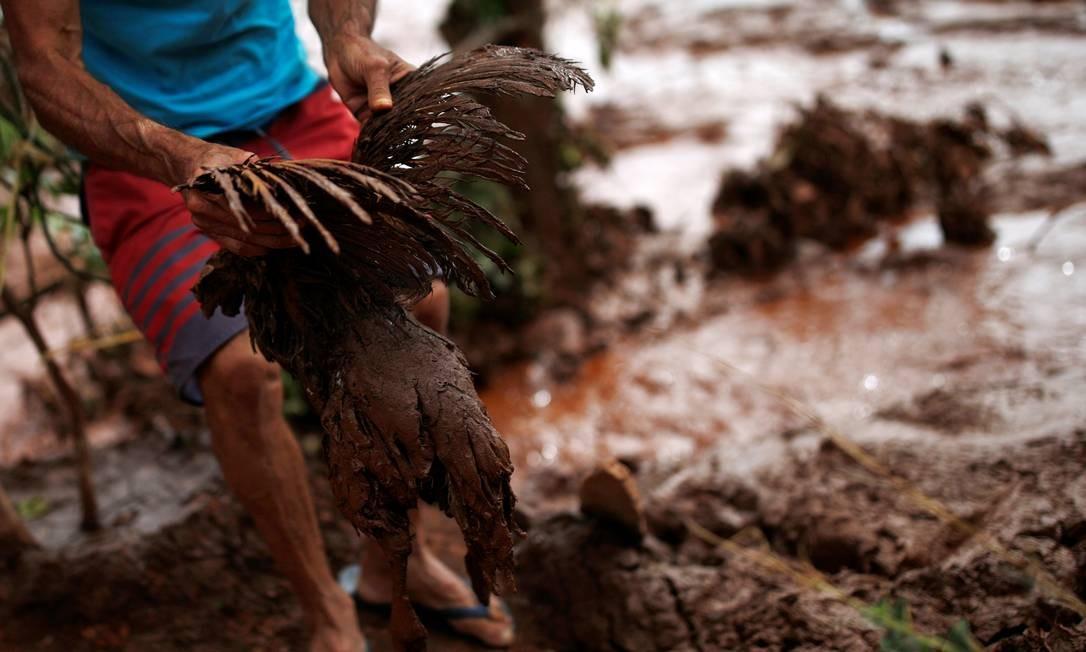 Três dias após a tragédia, muitos animais - vivos ou mortos - ainda estão presos na lama. Segundo a Vale, oito equipes atuam no resgate da fauna com suporte de biólogos da companhia e de empresas contratadas, além de especialistas em fauna silvestre e veterinários Foto: ADRIANO MACHADO / REUTERS