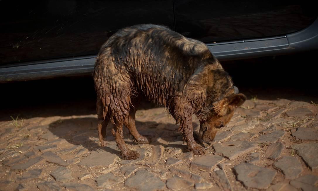 Outros, como o cão fotografado na comunidade do Parque da Cachoeira no último sábado, não escaparam da avalanche de lama, mas conseguiram sair com vida após a tragédia MAURO PIMENTEL / AFP