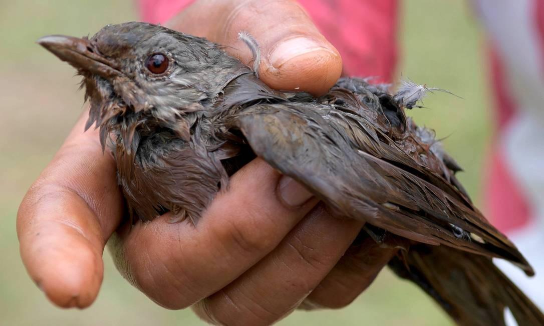 Impacto da onda de lama foi tão forte e repentino que arrasou matas e arrancou árvores, pegando até mesmo pássaros de surpresa Foto: WASHINGTON ALVES / REUTERS