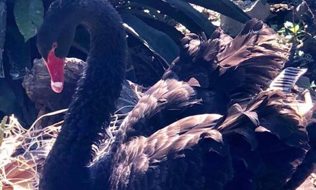 Julieta cuidava do ninho em que choca quatro filhotes quando foi morta. Na foto: Julieta cuidando de Goiabinha, no ano passado. Foto: Reprodução