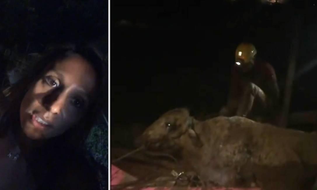 Luisa Mell mostrou resgate de bovino em Brumadinho Foto: Instagram/Reprodução