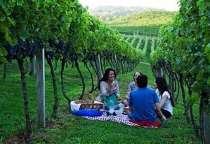 Grupo participa de um piquenique na vinícola Laurentis, em Bento Gonçalves, durante a vindima Foto: Divulgação