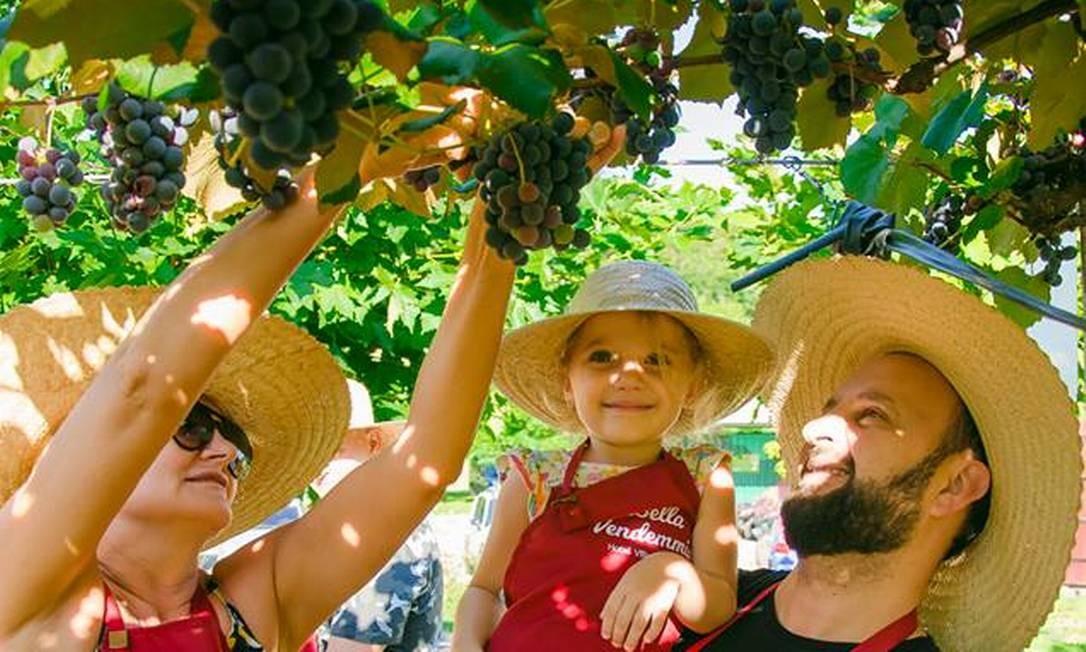 Família participa da experiência da vindima no hotel Villa Michelon, em Bento Gonçalves Foto: Rita Michelin / Divulgação
