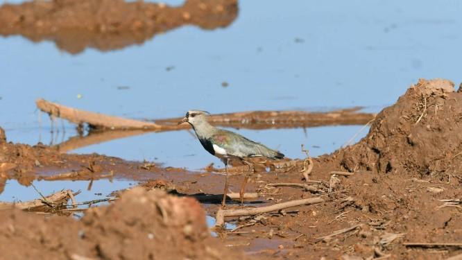 Ave em meio a lama após rompimento de barragem Foto: O Tempo / Agência O Globo