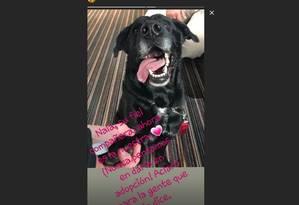 Irmã de Emiliano Sala em mensagem sobre Nala Foto: Reprodução