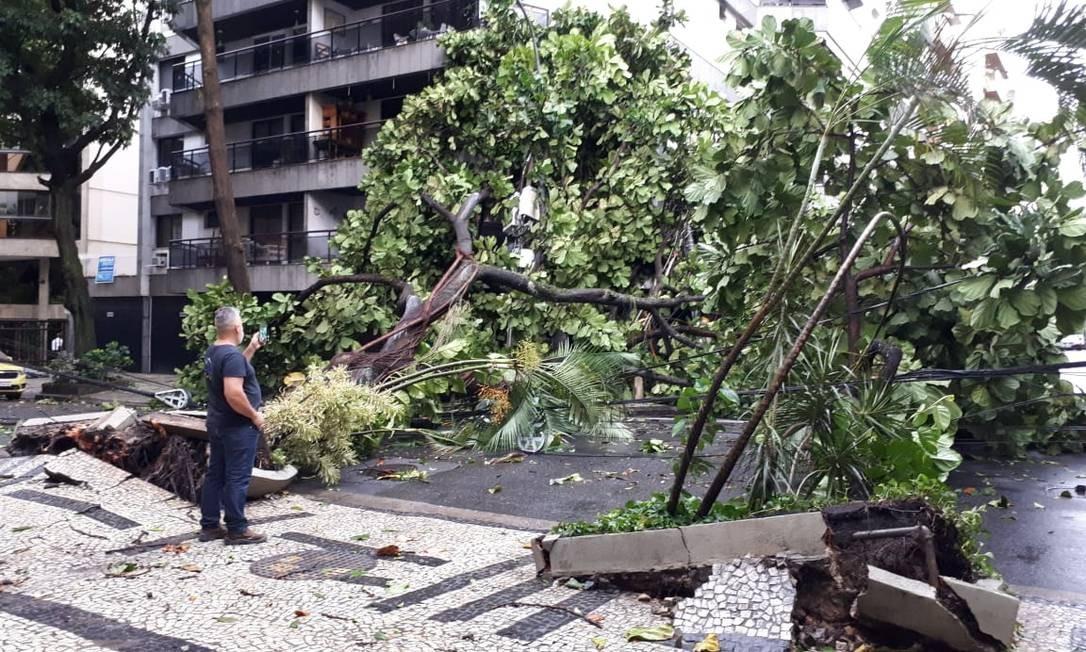 Árvore caída sobre fiação na Rua General Venâncio Flores, no Leblon Foto: Pedro Teixeira