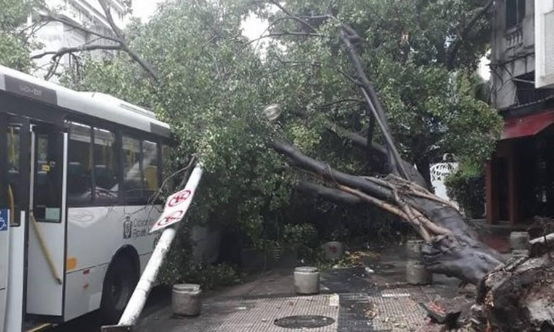 Queda de árvore na Voluntários da Pátria, em Botafogo Foto: Divulgação/Centro de Operações Rio