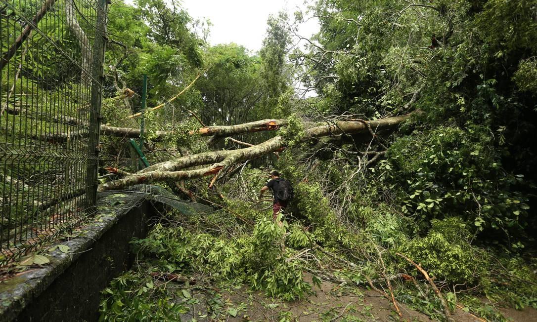 Árvore cai na Estrada das Canoas | Fabiano Rocha / Agência O Globo