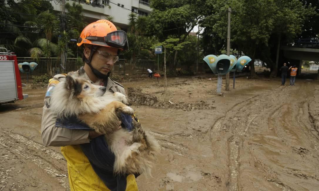 Bombeiro resgata um cachorro Rua Julieta Niemeyer | Gabriel Paiva / Agência O Globo