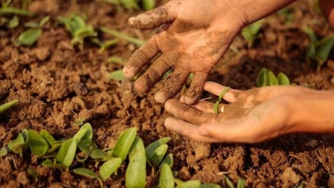 Metade das cidades do país não cumprem determinação do PNAE sobre compra de gêneros alimentícios a partir de agricultura familiar para alimentação escolar Foto: Brenno Carvalho / Agência O Globo.