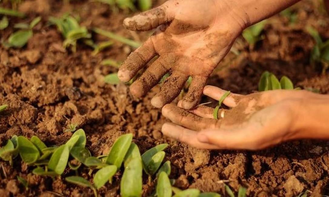 Os trabalhadores rurais e agricultores familiares passam a vida produzindo e alimentando suas famílias e comunidades locais Foto: Brenno Carvalho / Agência O Globo.