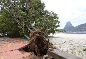 Uma árvore caída na Enseada de Botafogo, após temporal da última quarta-feira Foto: Guilherme Pinto / Agência O Globo