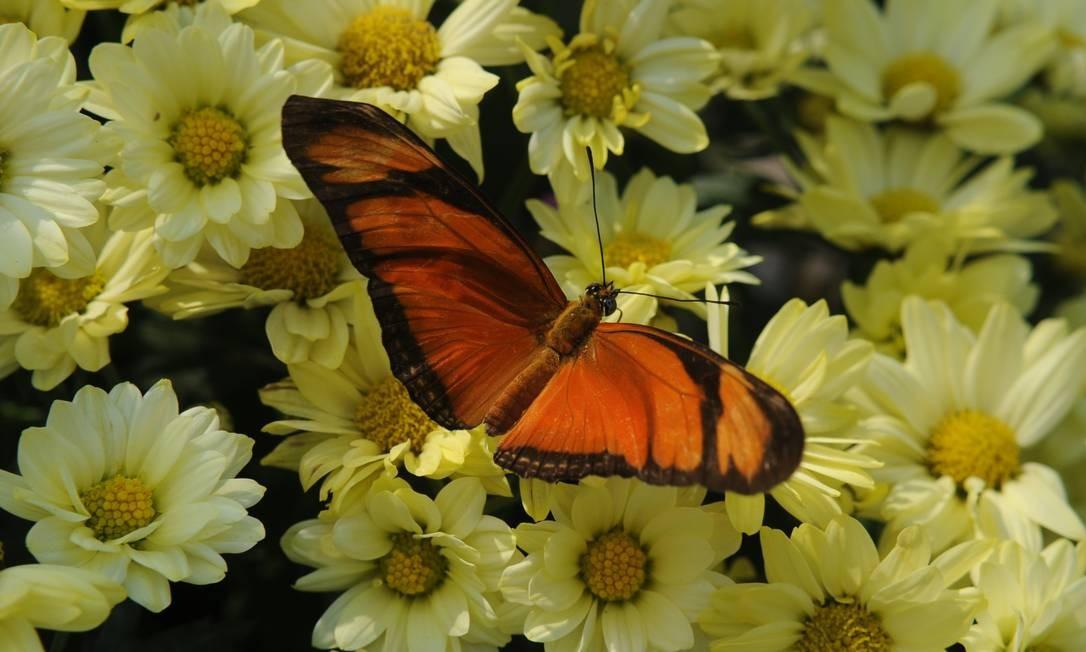 Inseto do borboletário da Fundação Oswaldo Cruz Peter Ilicciev / Divulgação
