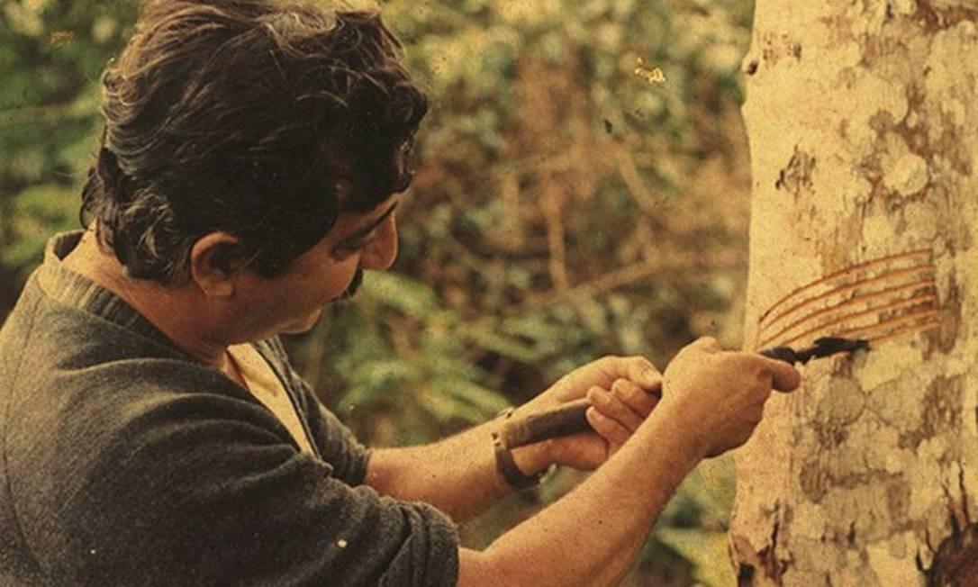 Chico inspirou a criação de reservas extrativistas, unidades de conservação que ocupam 12 milhões de hectares no país Foto: Divulgação
