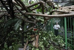 Estrago. Com o temporal da semana passada, árvores danificaram condomíniosno Leblon, na Zona Sul Foto: Custódio Coimbra / Agência O Globo