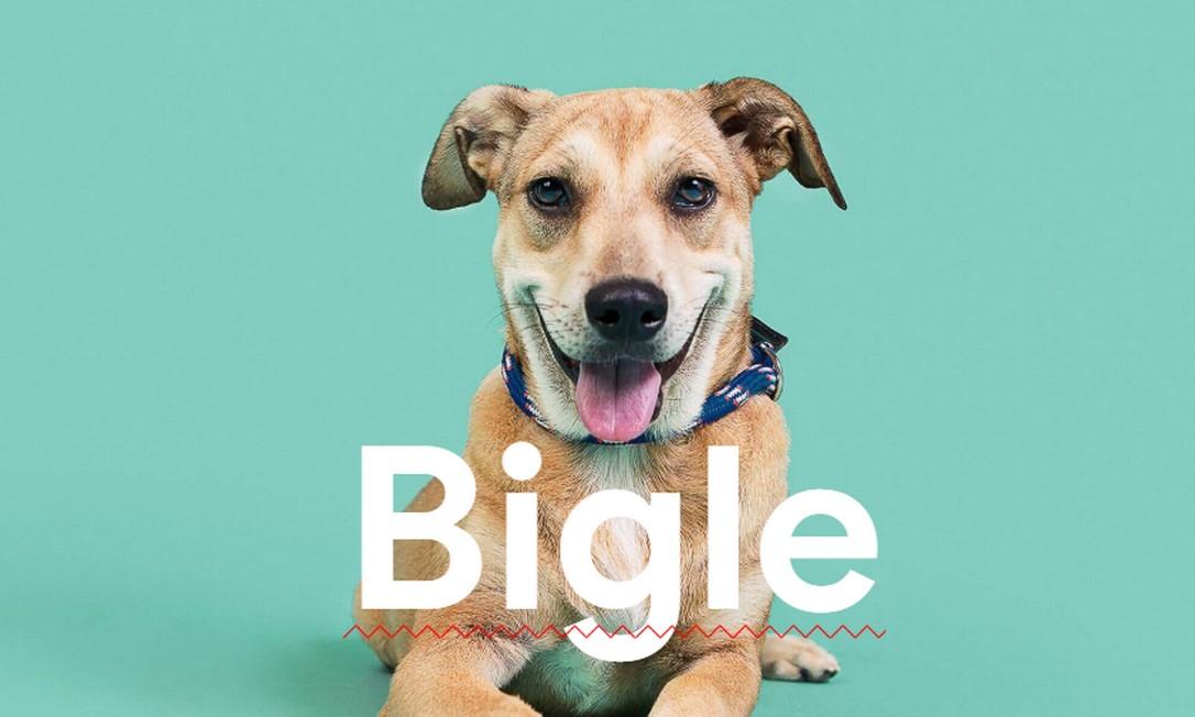 Cães recebem nomes de raça grafados incorretamente para facilitar adoção de vira-latas Foto: Reprodução