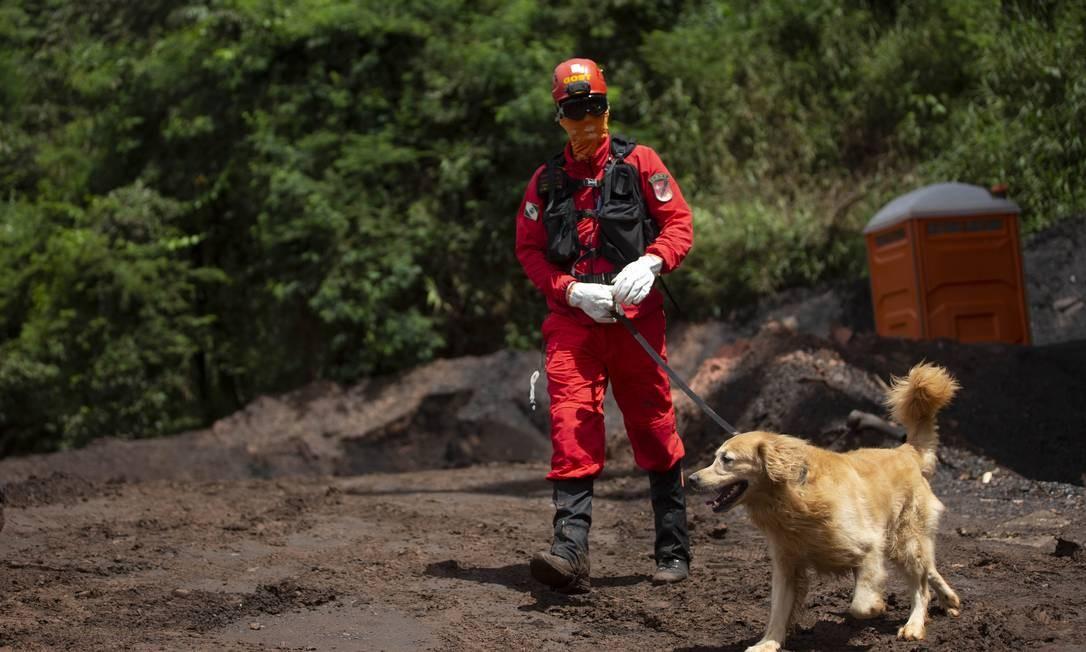 Cães treinados por Bombeiros auxiliam na procura por corpos Foto: Alexandre Cassiano / Agência O Globo