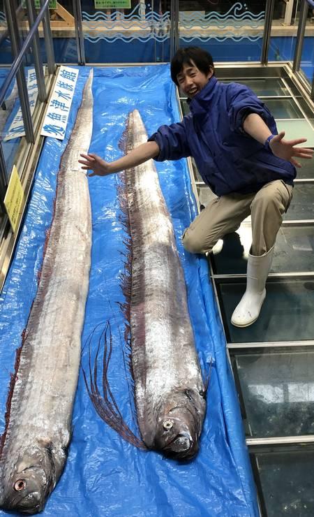 Duas gigantescas serpentes de águas profundas, há muito consideradas pelos habitantes locais um sinal de terremotos e tsunamis, foram capturadas na ilha japonesa de Okinawa Foto: HANDOUT / AFP