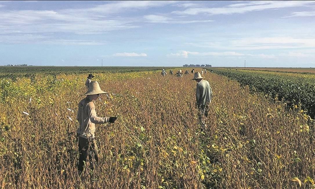 Plantação de soja na Bahia: exportadores hoje não precisam recolher contribuição previdenciária sobre a folha Foto: / Roberto Samora/Reuters/21-3-2018