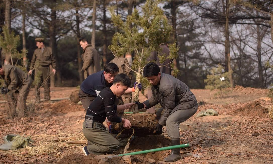 """Pinheiros são plantados no Monte Munsu enquanto a Coreia do Norte marca o """"dia de plantio de árvores"""" Foto: KIM WON-JIN / AFP"""