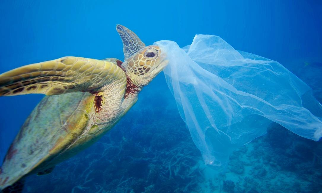 Tartaruga marinha presa em um saco plástico na Grande Barreira de Coral, na Austrália; material foi removido pelo fotógrafo antes que o animal o ingerisse Foto: Troy Mane / WWF/Divulgação