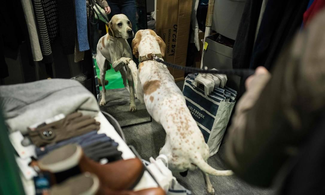Um pointer brinca com seu reflexo em um espelho, em um estande de roupas Foto: OLI SCARFF / AFP