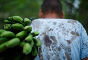 Plantação de bananas: governo quer barrar importação da fruta do Equador Foto: Daniel Marenco - Agencia O Globo