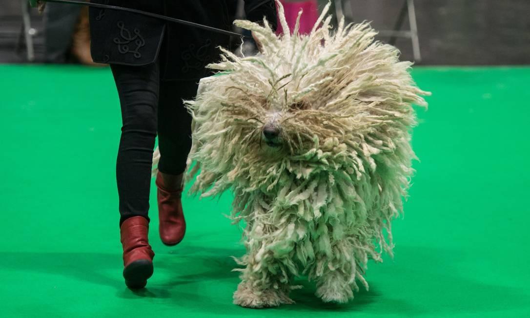 Uma mulher e seu cachorro da raça Komondor participam de prova do júri no segundo dia do Crufts Dog Show, no Centro Nacional de Exposições em Birmingham, Inglaterra Foto: OLI SCARFF / AFP