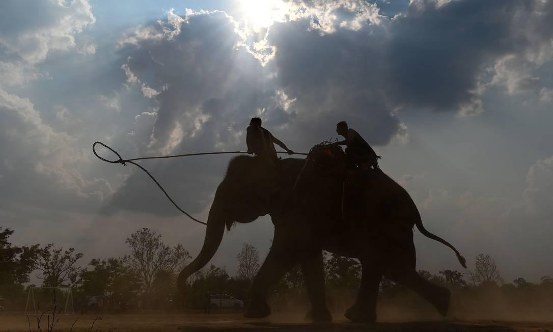 Homens treinam seus elefantes na véspera da corrida durante o festival de elefantes de Buon Don, no planalto central do Vietnã, na província de Dak Lak Foto: MANAN VATSYAYANA / AFP