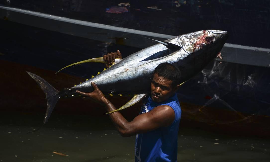 Um pescador indonésio descarrega atum após retornar do mar na província de Aceh, na Indonésia Foto: CHAIDEER MAHYUDDIN / AFP