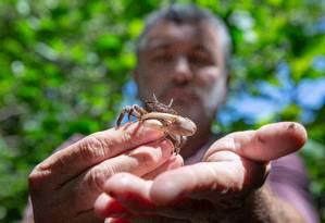 O biólogo Mário Moscatelli com um caranguejo maré, uma das espécies que resiste em meio à degradação Foto: Agência O Globo / Bruno Kaiuca
