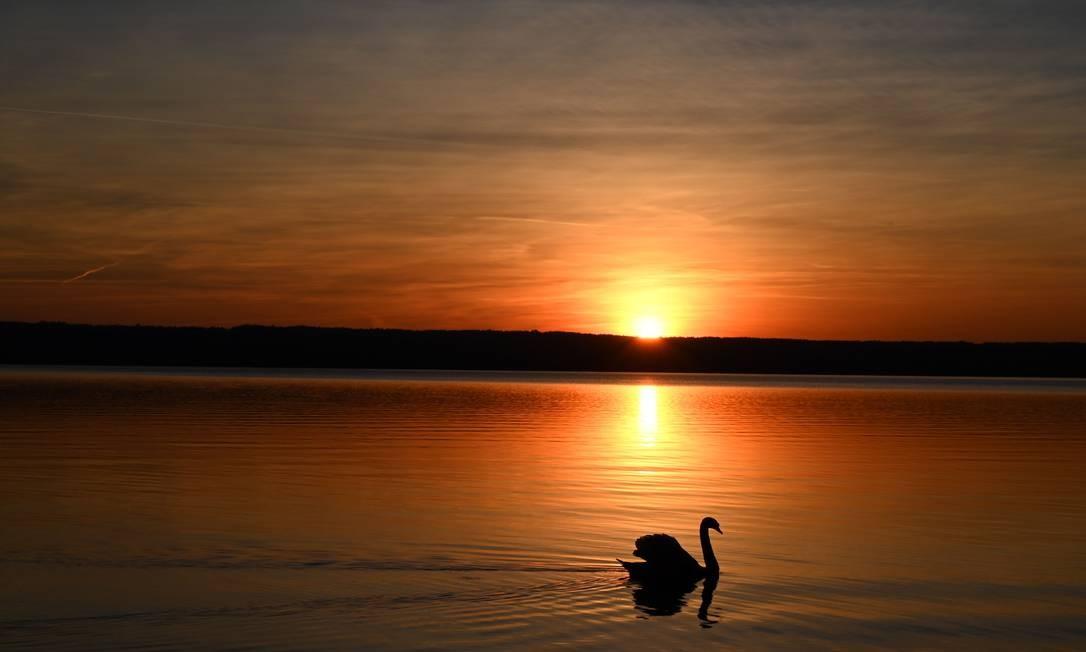 Um cisne nada no lago Ammersee, em Herrsching, sul da Alemanha, enquanto o sol se põe Foto: CHRISTOF STACHE / AFP
