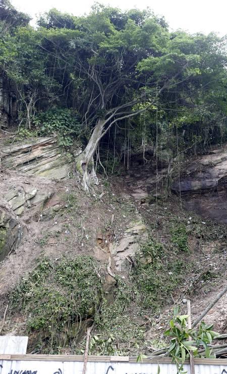 Área de onde desceu a encosta ainda possui outras árvores. Foto: Domingos Peixoto / Agência O Globo