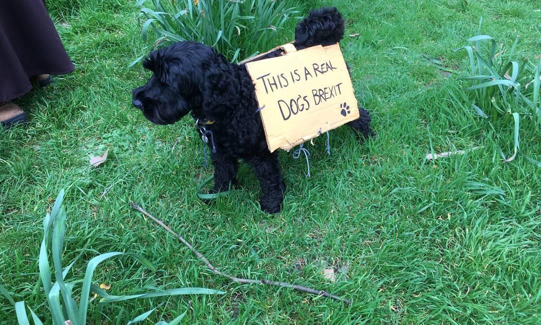 Até um cãozinho participa do protesto em Londres Foto: Marc Jones / Reuters