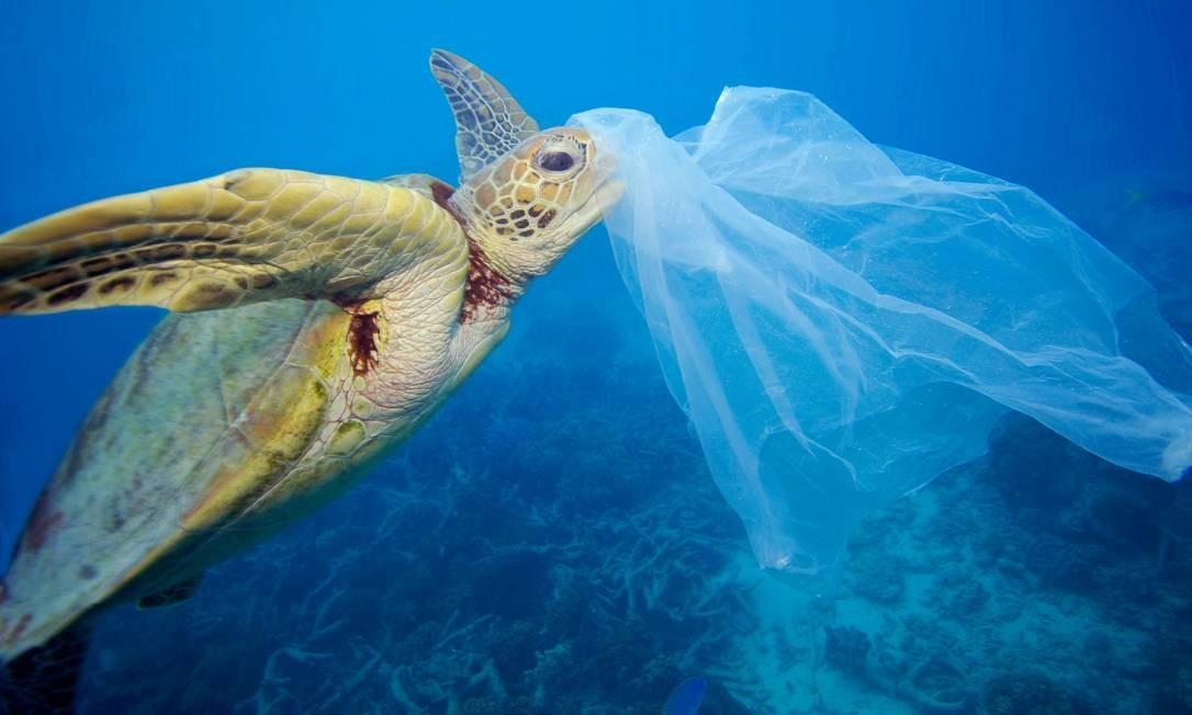 Inúmeros animais vêm sofrendo as consequências da poluíção gerada por lixos plásticos nos oceanos em todo o mundo. Na imagem, uma tartaruga marinha presa em um saco plástico na Grande Barreira de Coral, na Austrália; material foi removido pelo próprio fotógrafo antes que o animal o ingerisse Foto: Troy Mayne / Divulgação / WWF